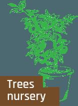 tree-but-en